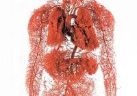 salur darah kapilari